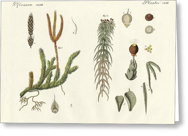 Strange Mosses Greeting Card by Splendid Art Prints