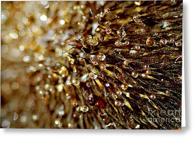 Beads Of Water Greeting Cards - Strange Greeting Card by Wendy Wilton