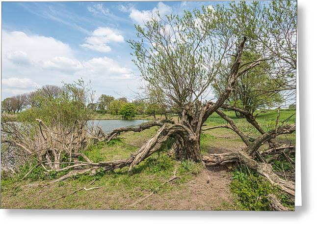 Noteworthy Greeting Cards - Strangely grown tree on the bank of a small lake Greeting Card by Ruud Morijn