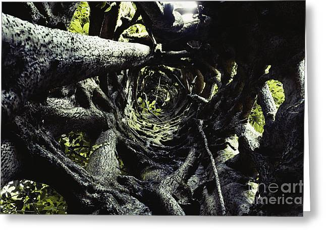 Ficus Aurea Greeting Cards - Strangler Fig Trunk Greeting Card by Gregory G. Dimijian, M.D.