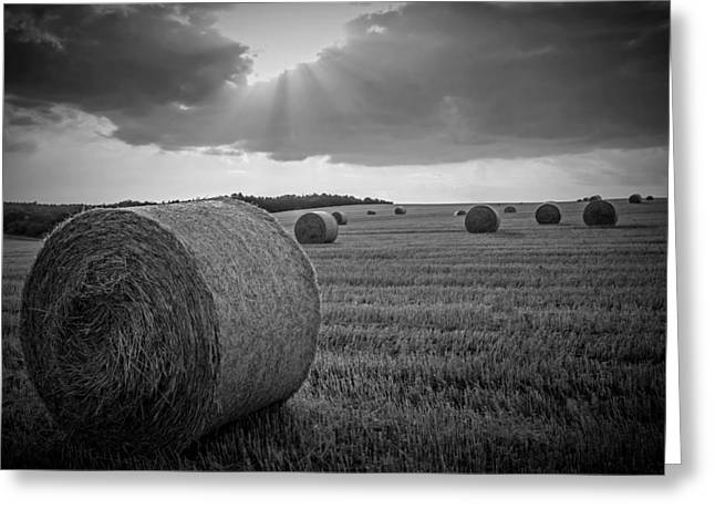 Black Lodge Photographs Greeting Cards - Straw Bales and Sunrays BW Greeting Card by David Dehner