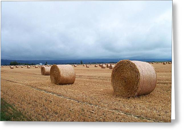 Nature Greeting Cards - Straw for the Garden Maybe Greeting Card by Nancy Pauling