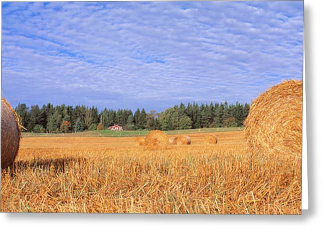 Bale Greeting Cards - Straw Rolls, Sweden Greeting Card by Panoramic Images