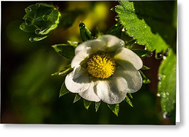 Strawberry Flower. Small Natural Wonders Greeting Card by Jenny Rainbow