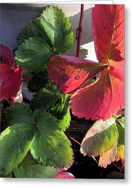 Berry Greeting Cards - Strawberry Plant - Fruit Greeting Card by Susan Carella