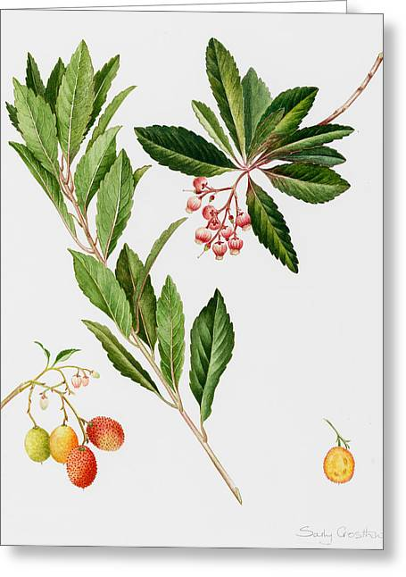 Cut In Half Greeting Cards - Strawberry tree Greeting Card by Sally Crosthwaite