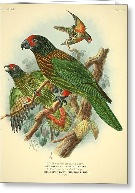 Streaked Lory Greeting Card by J G Keulemans