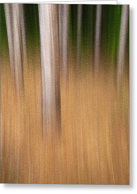 Gatineau Park Greeting Cards - Streaky Trees. Standing Room Greeting Card by Rob Huntley