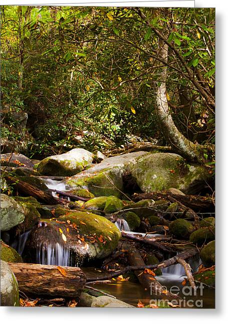 Gatlinburg Tennessee Greeting Cards - Stream at Roaring Fork Greeting Card by Lena Auxier