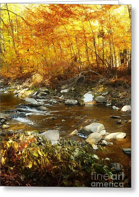 Evening Lights Greeting Cards - Stream at Sunset Greeting Card by HD Connelly