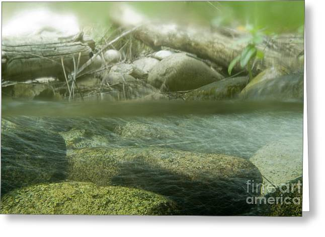 Nature Center Greeting Cards - Stream Cross Section Greeting Card by William H. Mullins