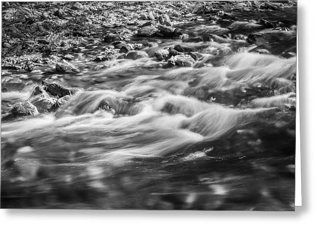 Tree Roots Greeting Cards - Stream Fall Colors Great Smoky Mountains Painted BW  Greeting Card by Rich Franco