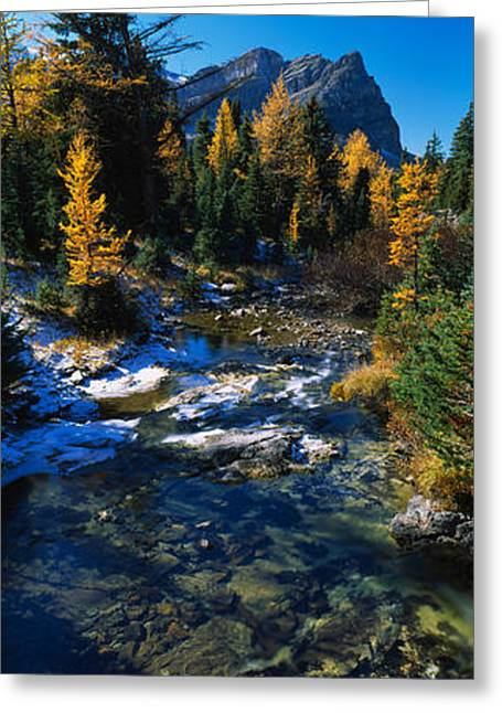 British Columbia Greeting Cards - Stream Flowing In A Forest, Mount Greeting Card by Panoramic Images