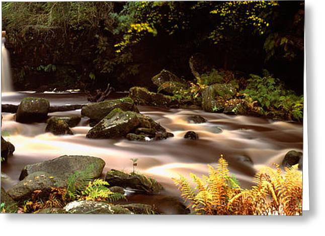 Moss Greeting Cards - Stream Flowing Through Rocks, Thomason Greeting Card by Panoramic Images