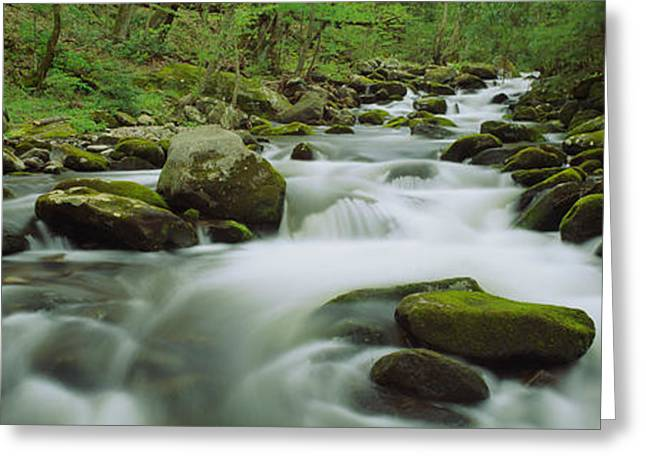 Park Scene Greeting Cards - Stream Flowing Through The Forest Greeting Card by Panoramic Images