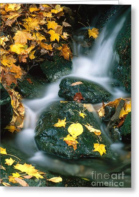 Fallen Leaf Greeting Cards - Stream In Autumn Greeting Card by George Ranalli
