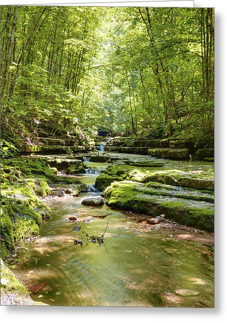 Beautiful Creek Greeting Cards - Stream in the forest Greeting Card by Alexey Stiop