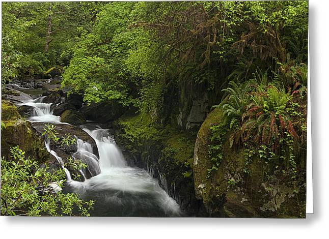 Stream Greeting Cards - Stream in the Woods Greeting Card by Andrew Soundarajan