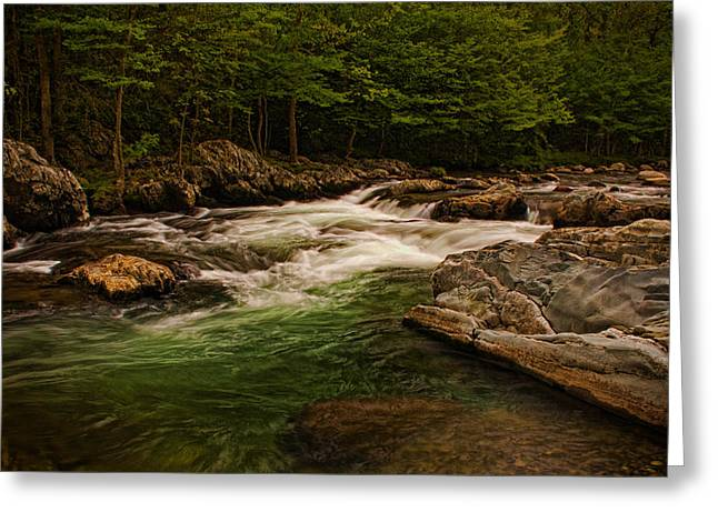 Dave Bosse Greeting Cards - Stream Within the Trees Greeting Card by Dave Bosse