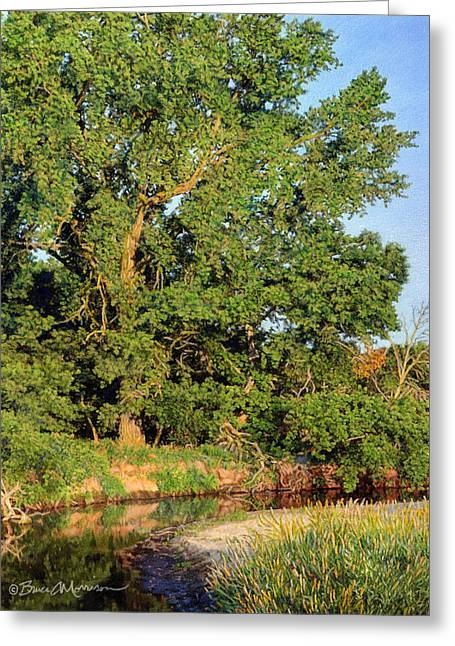 Summer Landscape Drawings Greeting Cards - Streamside Cottonwood Greeting Card by Bruce Morrison