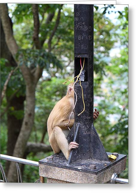 Monkey Greeting Cards - Street Monkey - Phuket Thailand - 01135 Greeting Card by DC Photographer