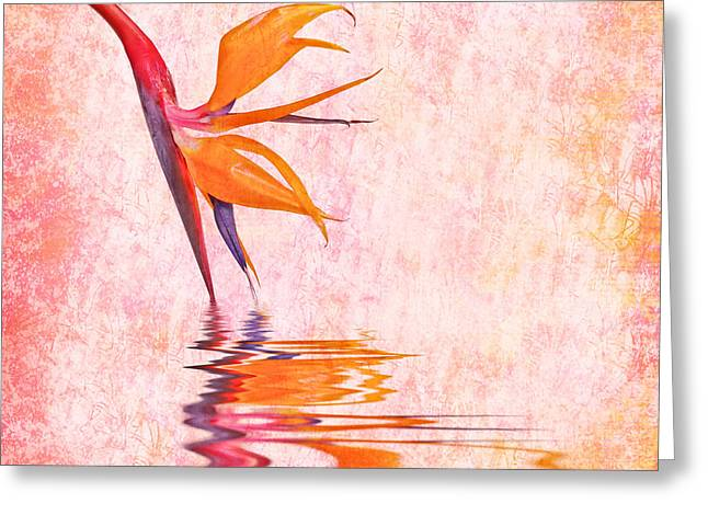 Strelitzia Greeting Cards - Strelitzia Greeting Card by Delphimages Photo Creations