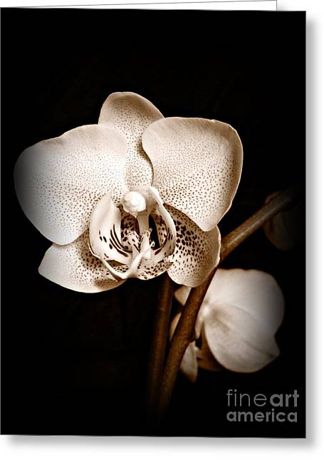 Neurotic Images Photography Greeting Cards - Strength and Beauty Sepia Greeting Card by Chalet Roome-Rigdon