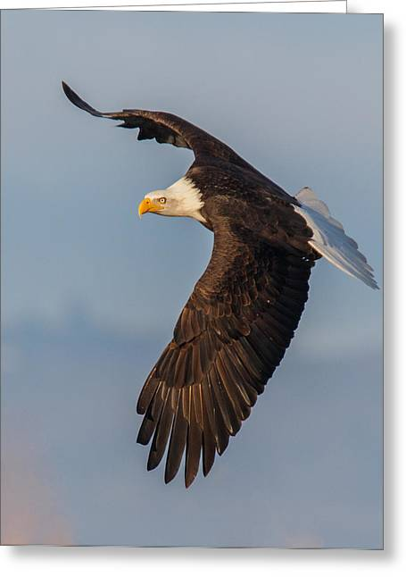 Eagles In Flight Greeting Cards - Strength Greeting Card by Angie Vogel