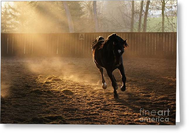 Galop Greeting Cards - Stretching The Legs Greeting Card by Brothers Beerens
