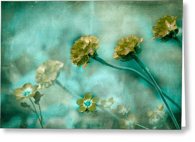 Textured Floral Greeting Cards - Stretching Toward Morning Greeting Card by Bonnie Bruno