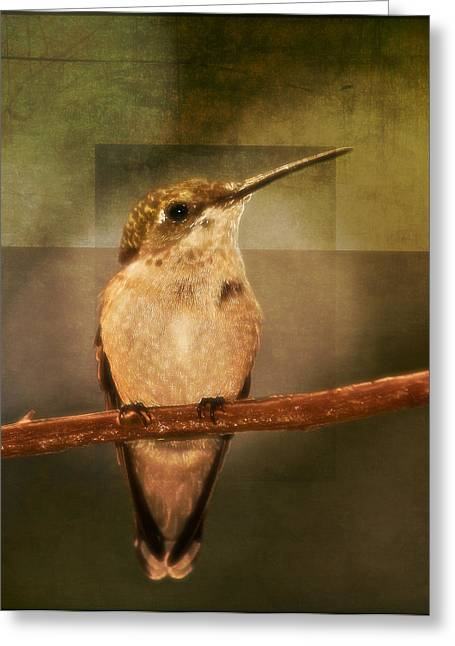 Graphics Framed Prints Greeting Cards - Strike a Hummingbird Pose Greeting Card by Melinda Dreyer