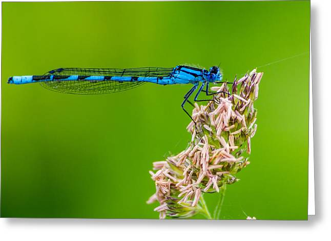 Dragon Fly Greeting Cards - Strike a Pose Greeting Card by Ian Hufton