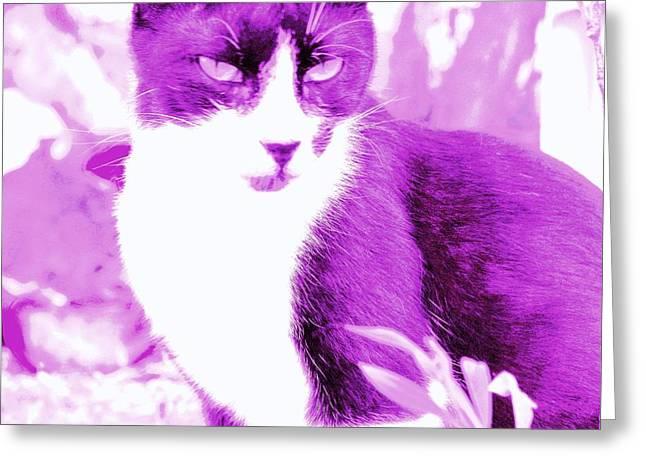 Neutered Greeting Cards - Strike Violet Greeting Card by Anita Dale Livaditis