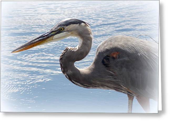Great Blue Heron Framed Print Greeting Cards - Striking Great Blue Heron  Greeting Card by Sheri McLeroy