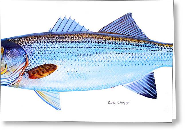 Bass Pro Shops Greeting Cards - Striped Bass Greeting Card by Carey Chen