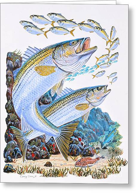 Striped Bass Rocks Greeting Card by Carey Chen