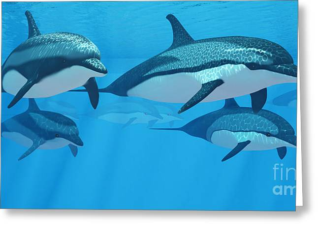 Ocean Images Digital Art Greeting Cards - Striped Dolphin Pod Greeting Card by Corey Ford