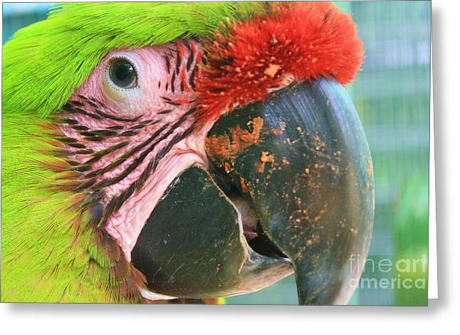 Green Forehead Greeting Cards - Striped Eye Greeting Card by Chuck  Hicks