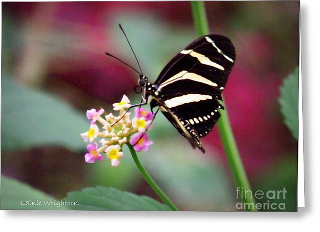 Lainie Wrightson Greeting Cards - Striped Greeting Card by Lainie Wrightson