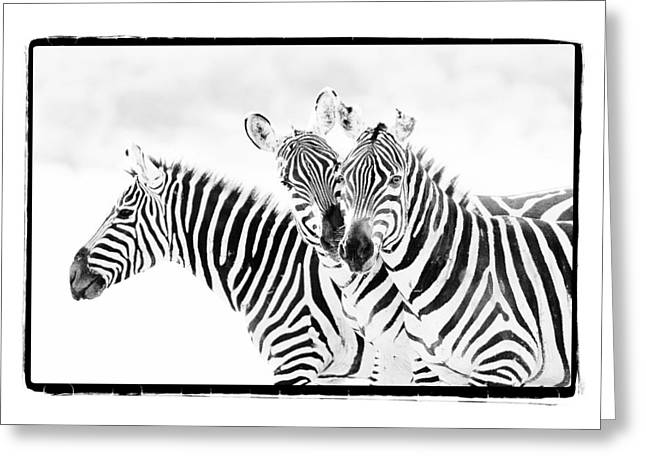 Surveying Greeting Cards - Striped Threesome Greeting Card by Mike Gaudaur