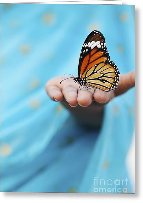 Cloth Greeting Cards - Striped Tiger Butterfly Greeting Card by Tim Gainey