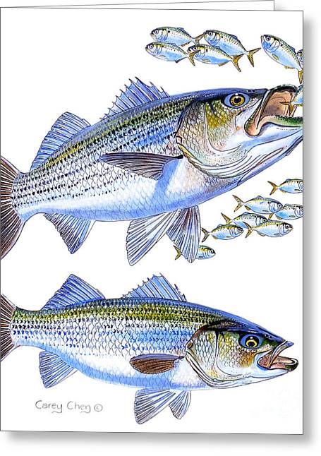 Stripers Greeting Card by Carey Chen
