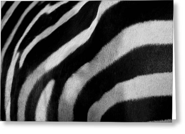 Fur Stripes Greeting Cards - Stripes Greeting Card by Andreas Berheide