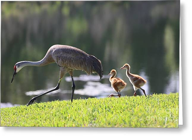 Baby Bird Greeting Cards - Stroll by the Pond Greeting Card by Carol Groenen