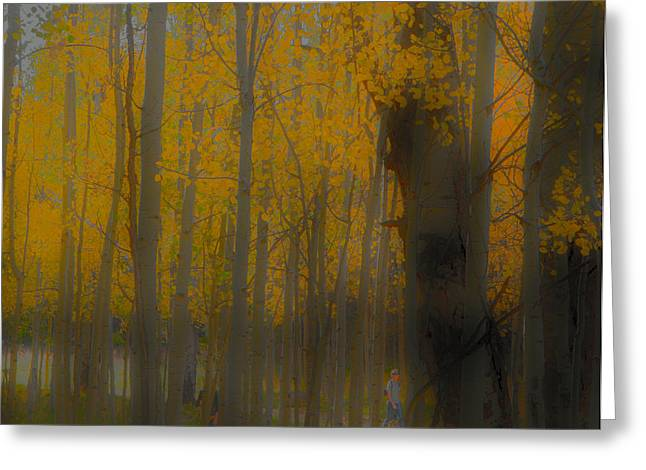Snowbowl Greeting Cards - Strolling in the Aspens Greeting Card by Tom Kelly