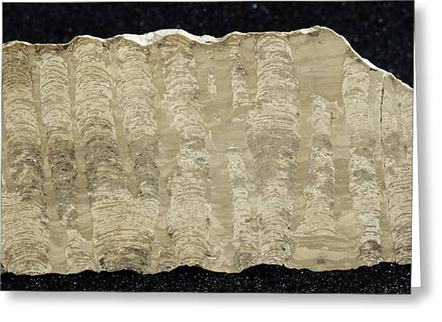 Stromatolite Greeting Card by Science Photo Library