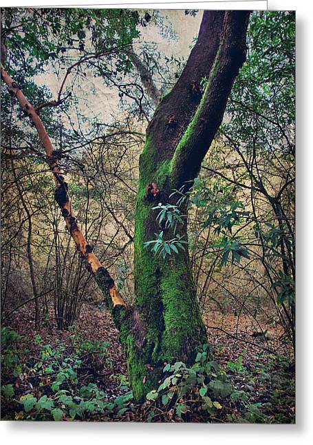 Mossy Trees Greeting Cards - Strong Enough to Hold You Greeting Card by Laurie Search