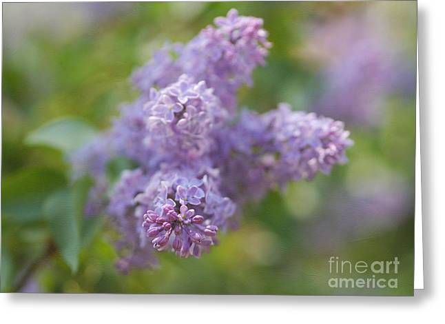 Shades Of Purple Greeting Cards - Strong Fragrance Greeting Card by Irina Wardas