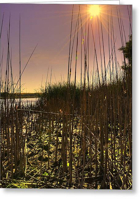 River Scenes Greeting Cards - Strong Summer Sun Greeting Card by Svetlana Sewell