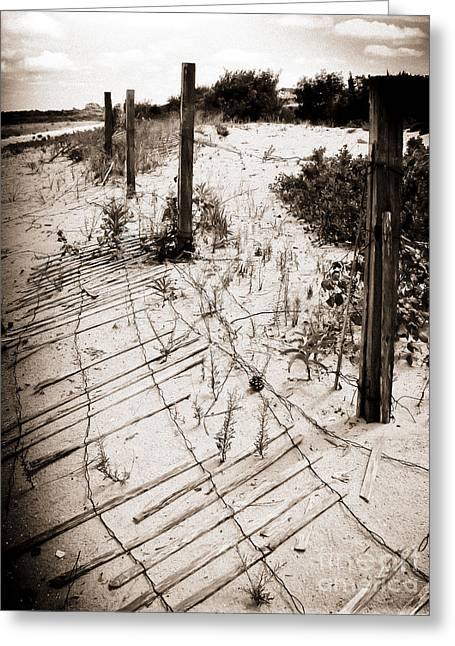 Photography By Colleen Kammerer Greeting Cards - Strong Winds Greeting Card by Colleen Kammerer